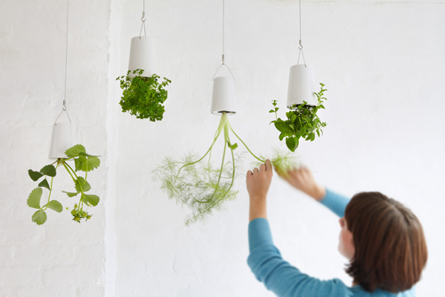 室内园艺:在墙上种花